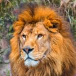 劇団四季ライオンキングはなぜ15年もロングヒットを続けられるのか ~仕事に役立つ豆知識~